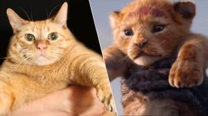 gato ou leão